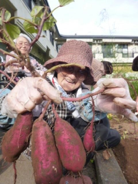 介護付き有料老人ホーム ウェルケア伊豆高原 恒例の芋掘り